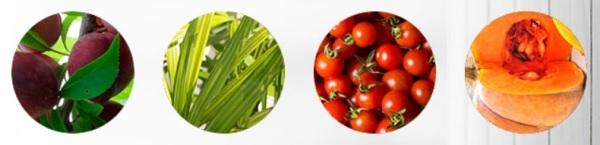 Ingredientes de origen biológico