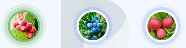 ¿Qué ingredientes contiene BerryFit?