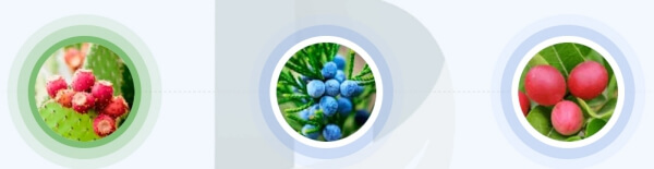 Vanefist Neo - ¿Qué ingredientes contienen las cápsulas?