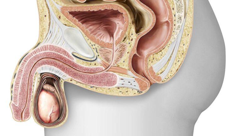 Los mejores suplementos para la hipertrofia de próstata - Ranking 2021